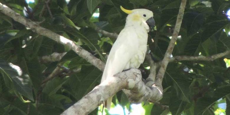 Tertarik Mengamati Burung? Datanglah Ke Flores