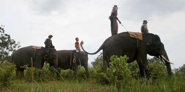 Selain Bromo Dan Komodo, Ini 5 Taman Nasional Yang Wajib Dikunjungi