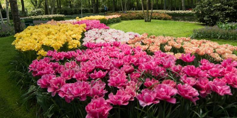 linda anita pemandangan taman bunga yang menawan