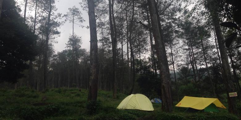 Ke Semarang? Yuk, Berkemah Di Hutan Pinus Kaki Gunung Ungaran