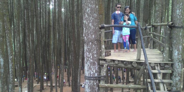 Ini Lagi Populer Di Medsos, Hutan Pinus Dlingo…