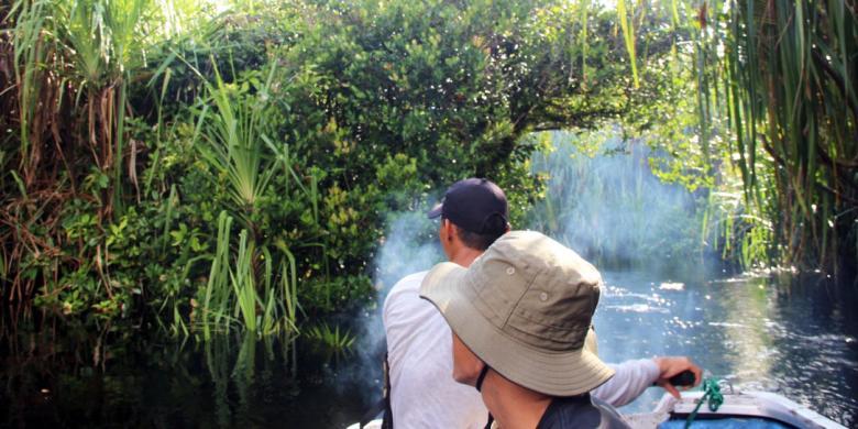 """Menyusuri """"Jalur Reptil"""" di Taman Nasional Sebangau Kalimantan video viral info traveling info teknologi info seks info properti info kuliner info kesehatan foto viral berita ekonomi"""