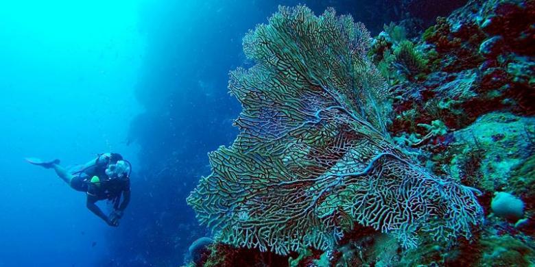 Tips Berfoto Dengan Hewan Laut Ala Marischka Prudence