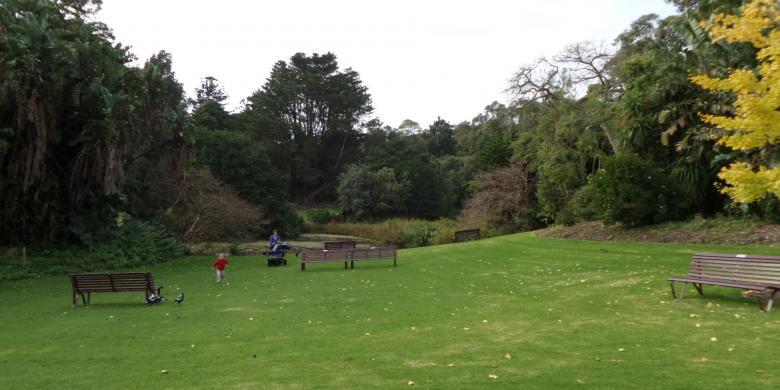 Ketika Bunga Bangkai Raksasa Indonesia Jadi Primadona Di Royal Botanic Gardens Melbourne