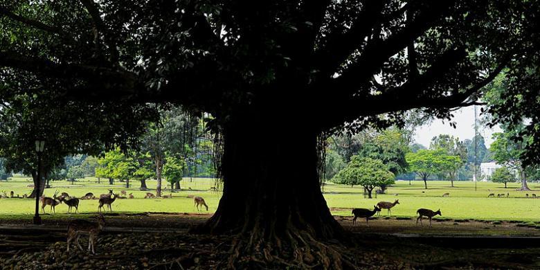Kota Bogor, Tetirah Di Kota Mozaik Sejarah