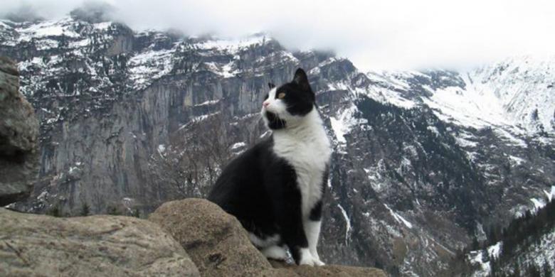 Kucing Imut Ini Bantu Pendaki Yang Tersesat Di Pegunungan Swiss