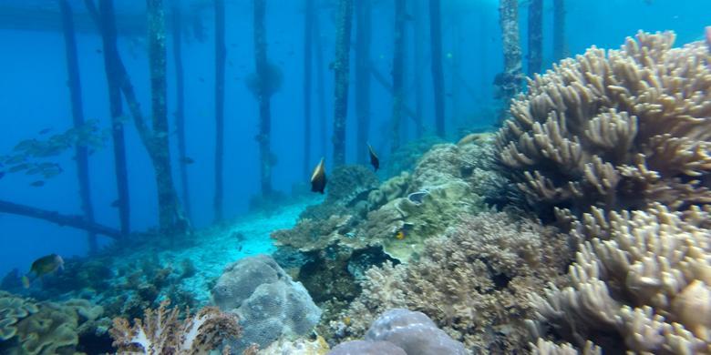 """Pulau Kri, Titik Menyelam Populer Di Raja Ampat Yang """"Tercoreng"""""""