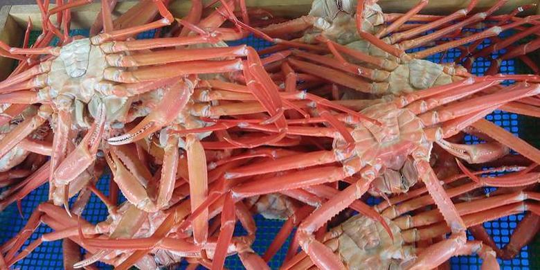 Mengapa Kepiting Betina Lebih Baik Tidak Dikonsumsi?
