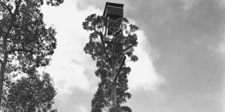 Rumah Pohon Setinggi 50 Meter Di Perth Akan Merayakan Ulang Tahun Ke-75