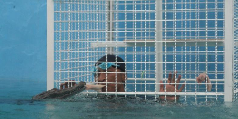 Tantangan Berenang Bersama Buaya, Berani Coba?