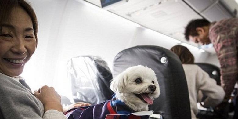 Japan Airlines Luncurkan Paket Penerbangan Dengan Anjing Peliharaan