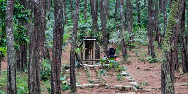 Purwakarta Juga Punya Hutan Pinus!