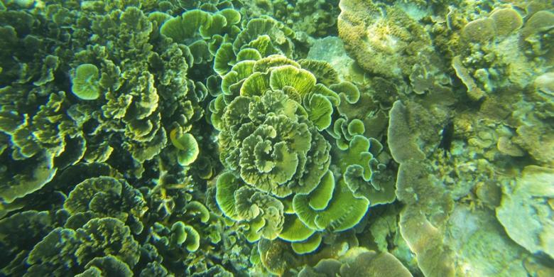 Patut Disimak, Panduan Wisata Bahari Ramah Lingkungan
