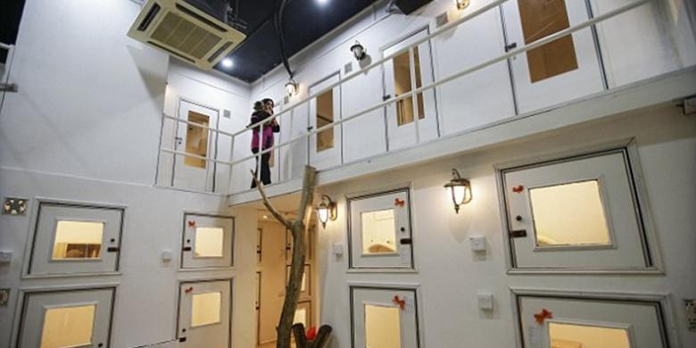 tersedia 35 ruang tidur dengan empat tipe kamar yang didesain khusus untuk memanjakan para kucing