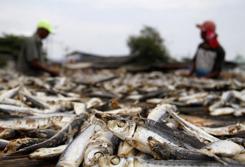 Produksi Ikan Asin Muara Angke