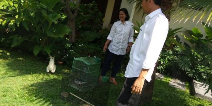 Ternyata Kodok-kodok Piaraan Jokowi Sudah Mati Semua
