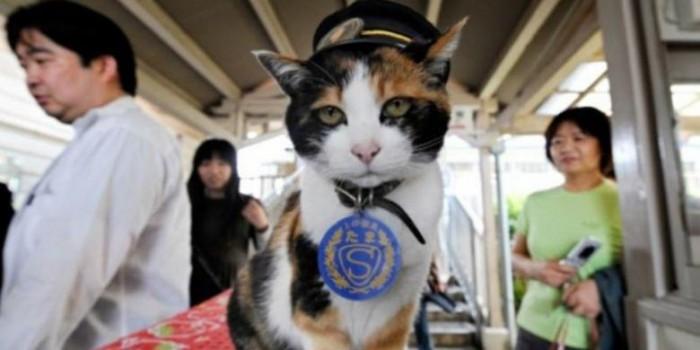 Pemakaman Mewah untuk Kucing yang Jadi Kepala Stasiun KA di Jepang