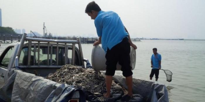 Sudah 10 Kali Diangkut, Bangkai Ikan di Ancol Tak Habis-habis