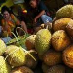 Kediri Gelar Festival Durian, Ribuan Durian Dibagi-bagikan